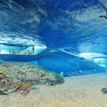 marine_research_center_bali_t041110_5